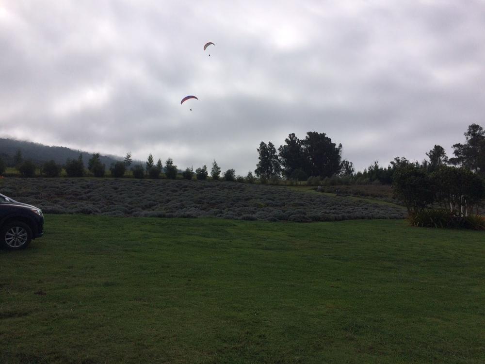 Parasailers above AKL