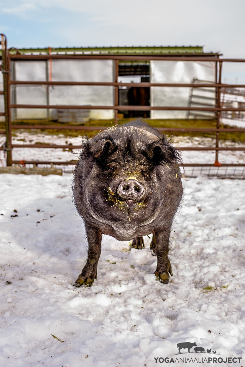 Harry Bob, Ching Farm Rescue & Sanctuary, Herriman, Utah