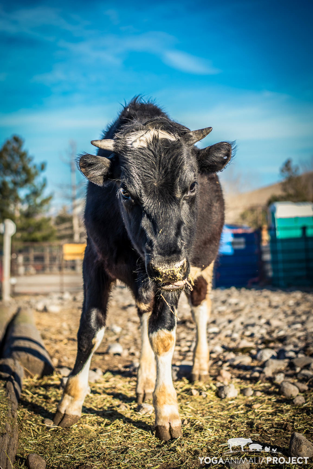 Grimm, Ching Farm Rescue & Sanctuary, Herriman, Utah