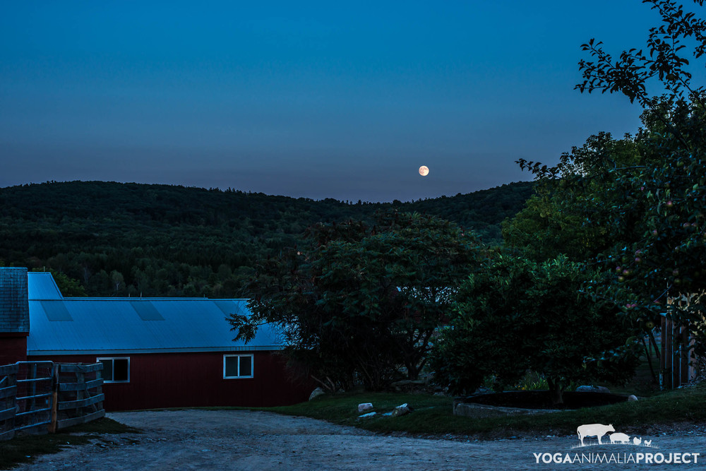 Full Moon at Farm Sanctuary, Watkins Glen, New York