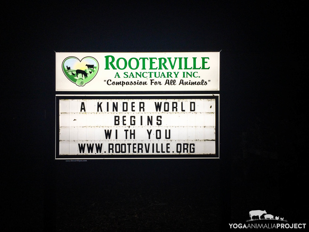 Rooterville Sign lit up for the night