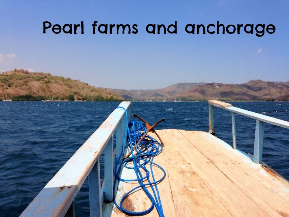 harbour and pearl farm.JPG