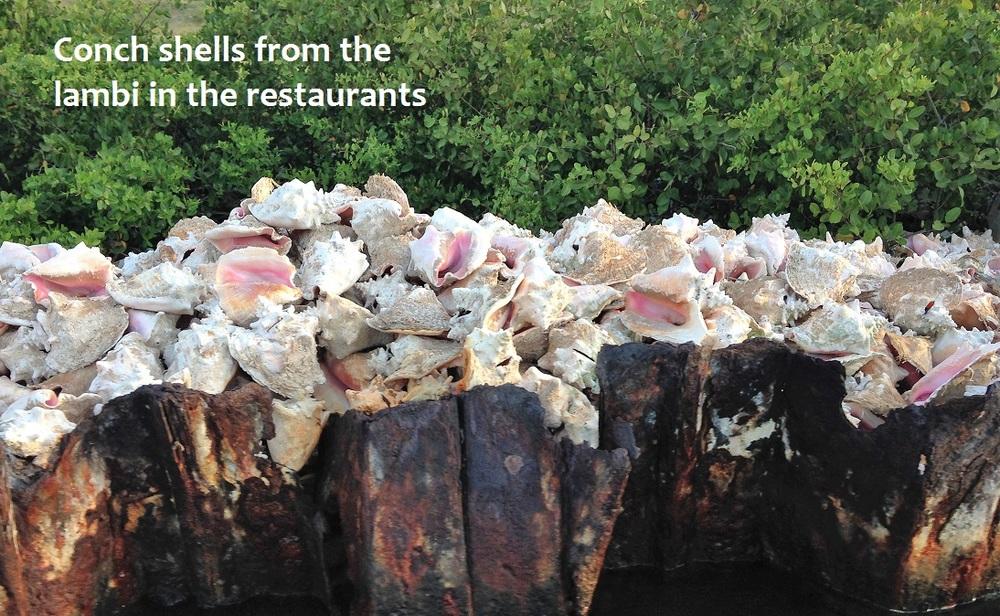 conch shells.JPG