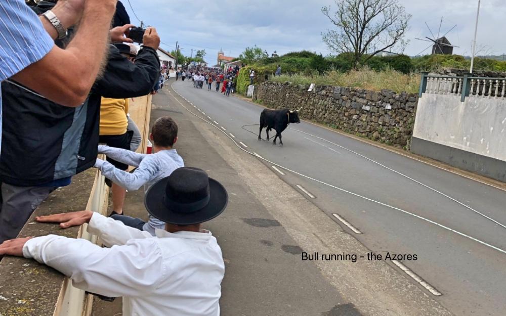 bull running.jpg