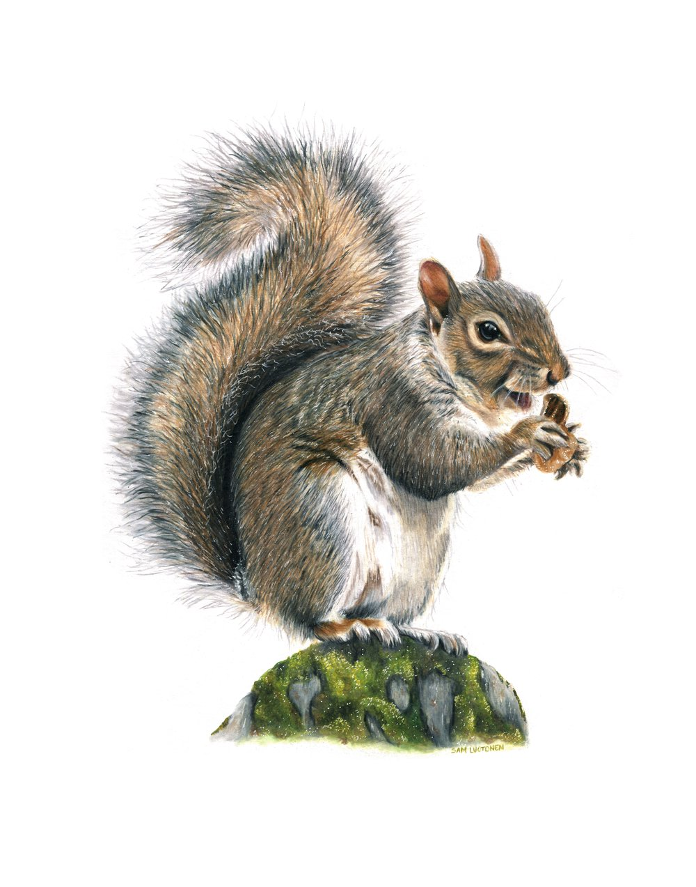 Fox Squirrel Website.jpg