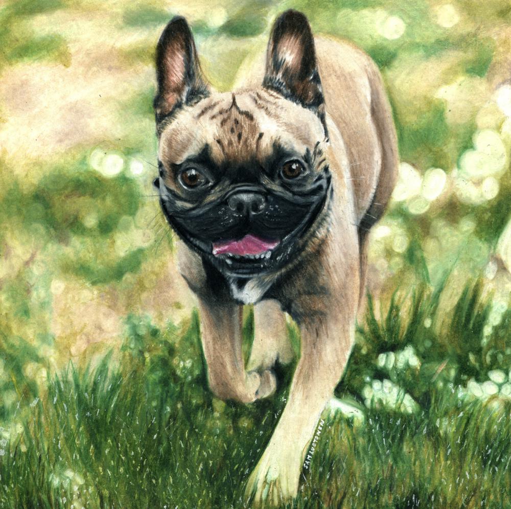 SamLuotonenFrechbulldog.png
