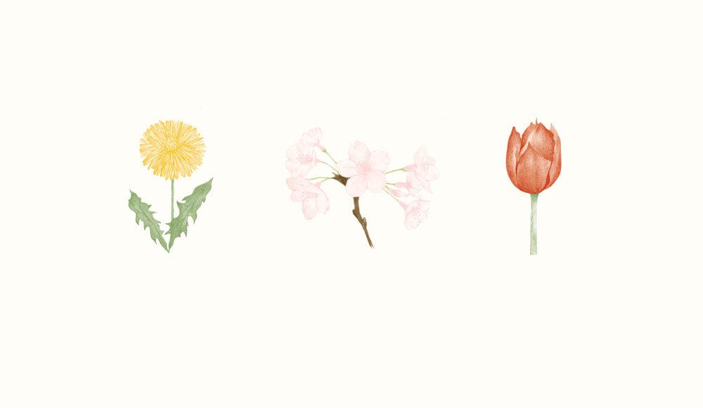 hiyokoimai_flower_nihongopost.jpg