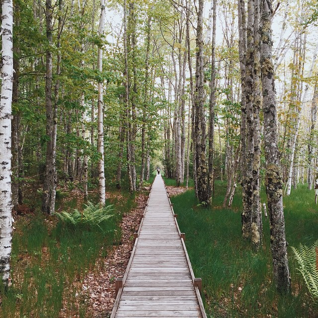 This_is_from_the_Sieur_de_Monts_boardwalk_in_Acadia_National_Park._Stunning_little_trail..__acadianationalpark__VSCOcam__vernonsinmaine__maine__iphone6.jpg