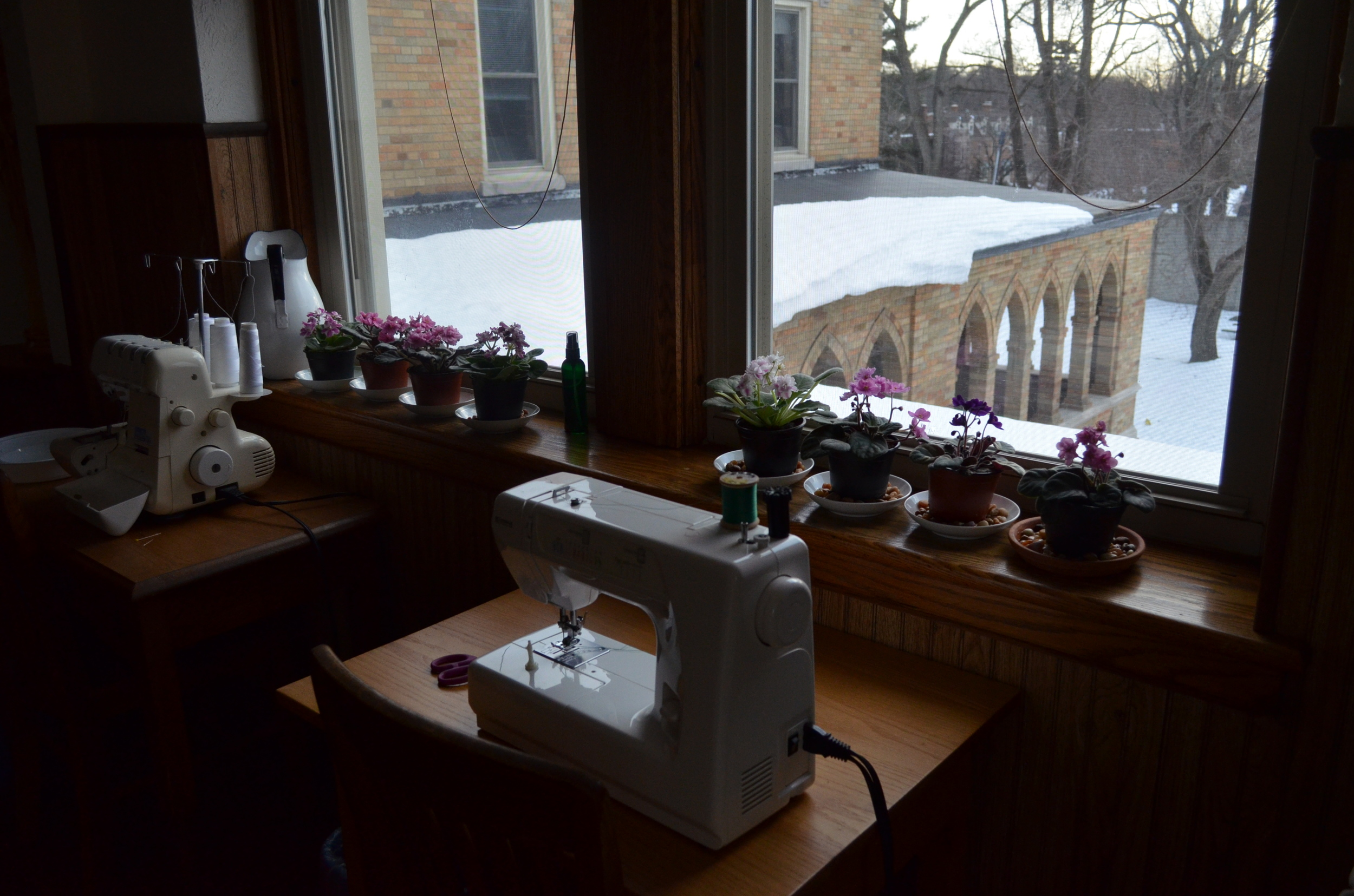 African Violets in the novitiate...we are ready for Spring!