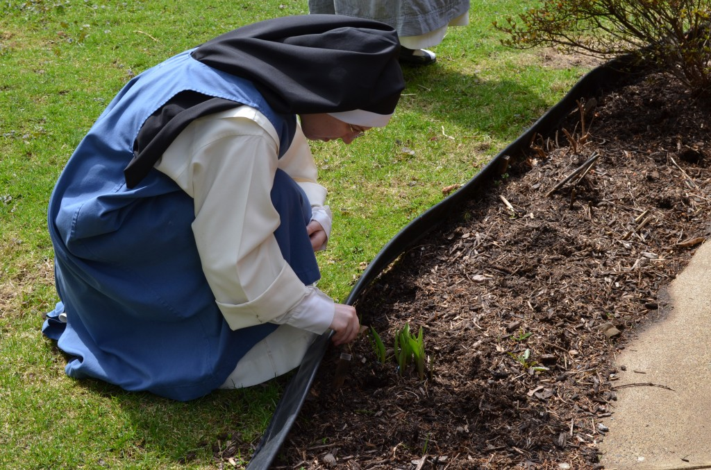 Sr. Mary Veronica checks on last year's Easter tulips in her garden. They came up!