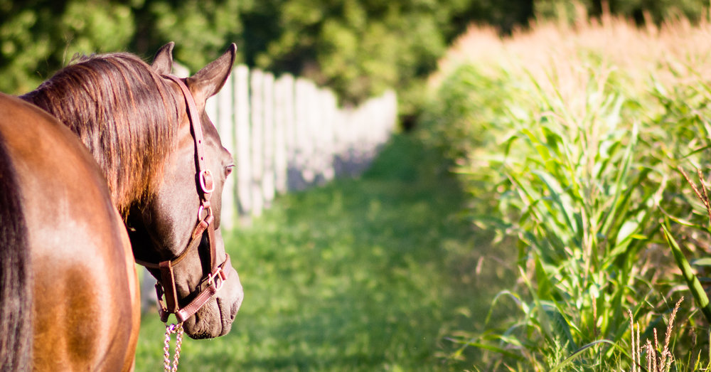Equestrian Love -