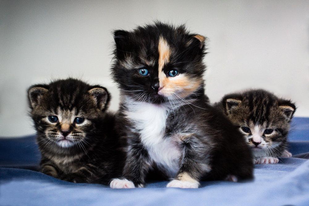 Three little kittens lost their mittens -