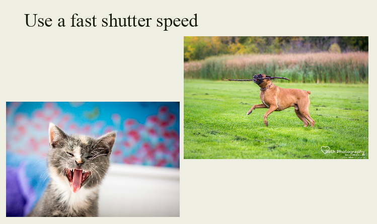 Play time and even nap time can be frozen in time with a fast shutter speed.