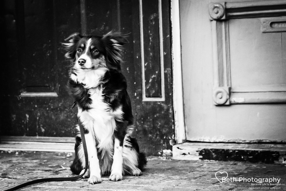 Beth Photography - Pet Photographer -Servicing Ottawa to Cornwall-1-3.jpg