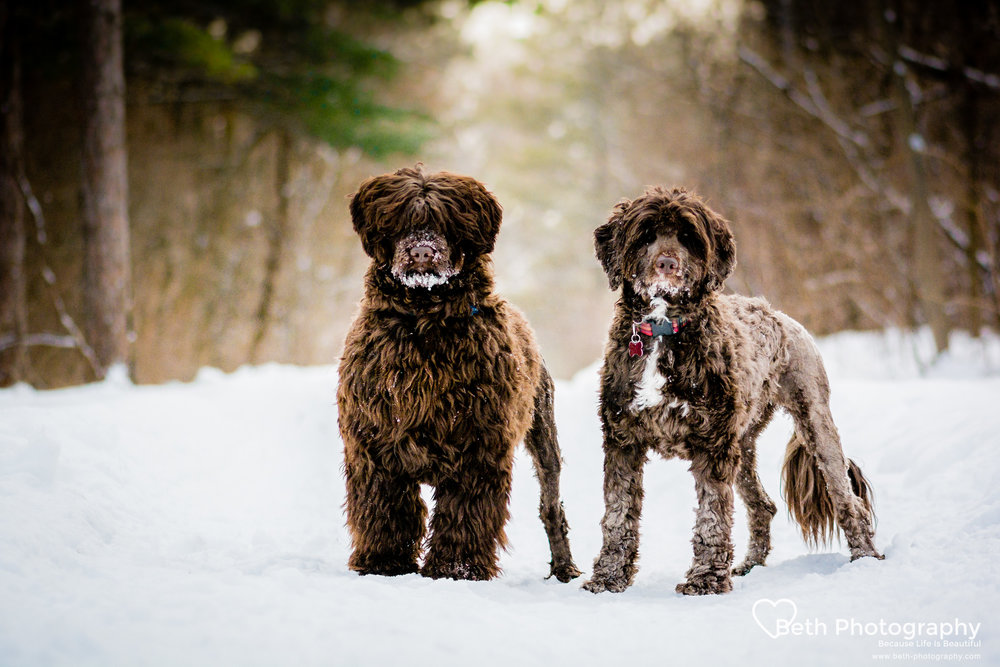 Beth Photography - Pet Photographer -Servicing Ottawa to Cornwall-81.jpg