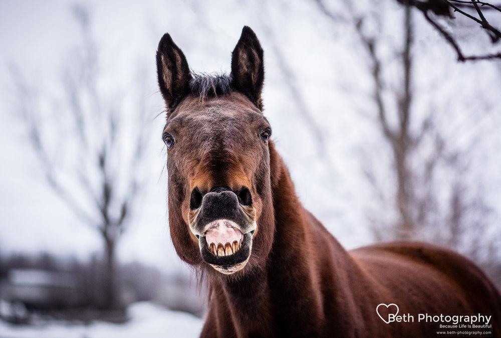 Beth Photography - Pet Photographer -Servicing Ottawa to Cornwall-24.jpg