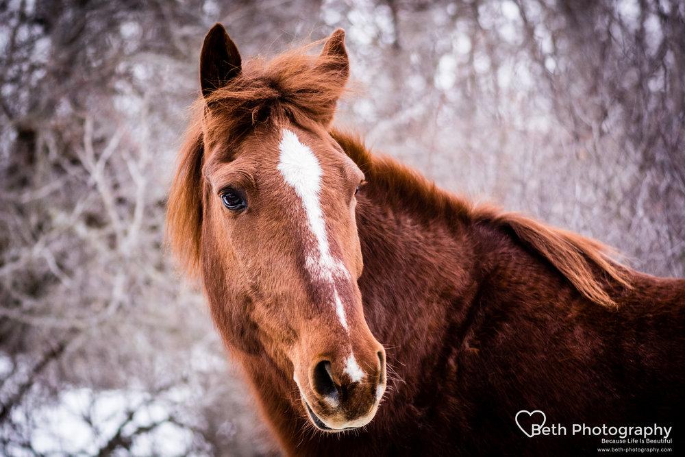 Beth Photography - Pet Photographer -Servicing Ottawa to Cornwall-22.jpg