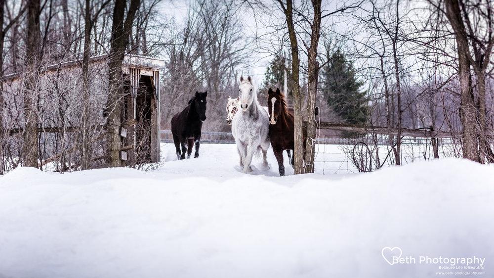 Beth Photography - Pet Photographer -Servicing Ottawa to Cornwall-61.jpg