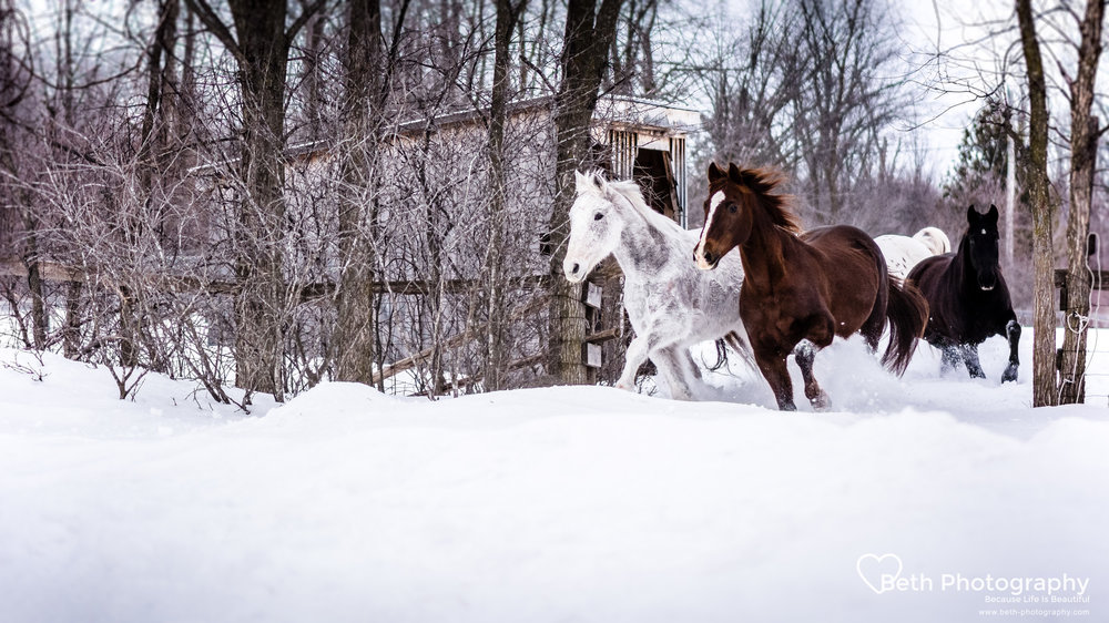Beth Photography - Pet Photographer -Servicing Ottawa to Cornwall-63.jpg