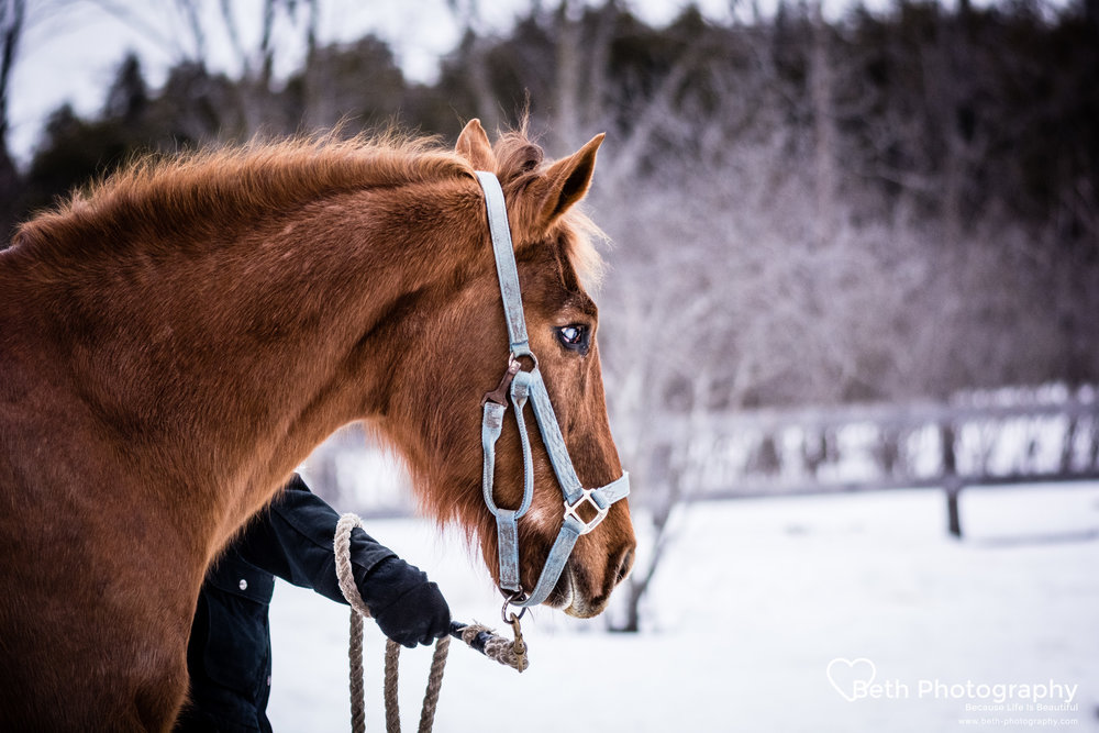 Beth Photography - Pet Photographer -Servicing Ottawa to Cornwall-35.jpg