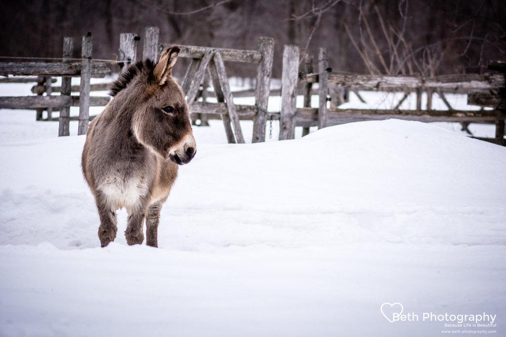 Beth Photography - Pet Photographer -Servicing Ottawa to Cornwall-77.jpg