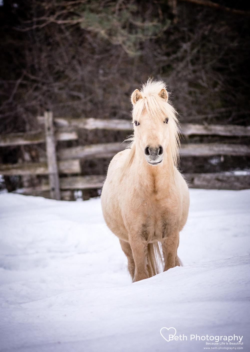 Beth Photography - Pet Photographer -Servicing Ottawa to Cornwall-79.jpg