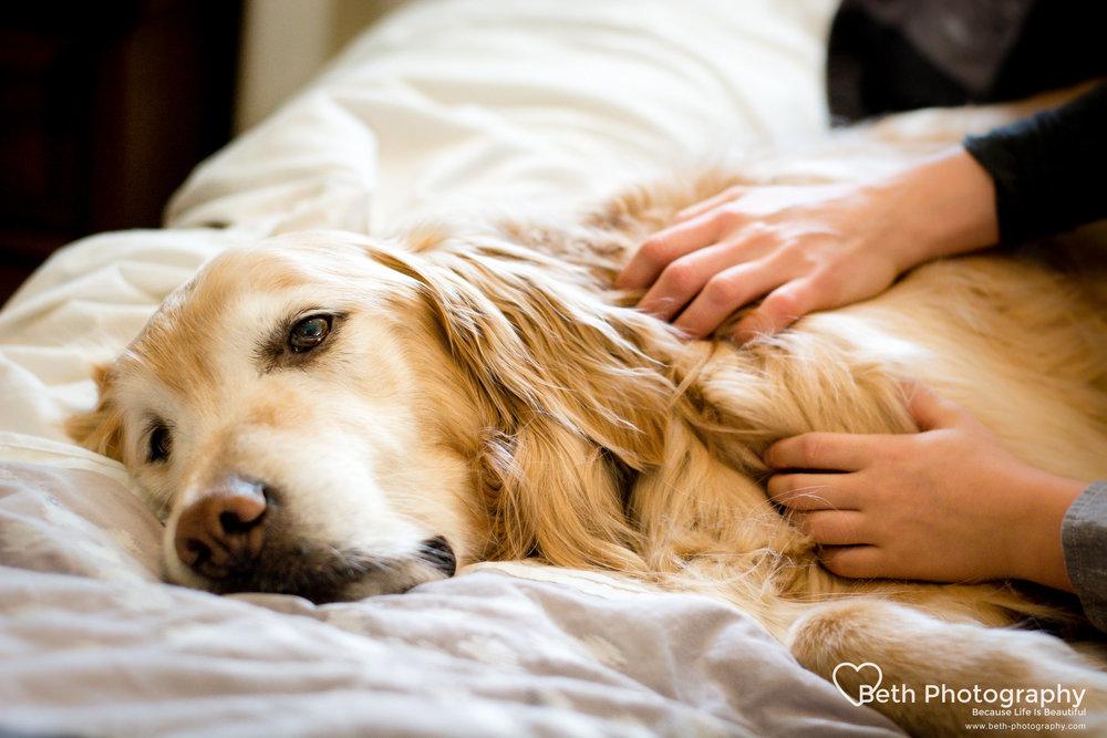 Beth Photography - Pet Photographer -Servicing Ottawa to Cornwall-38.jpg