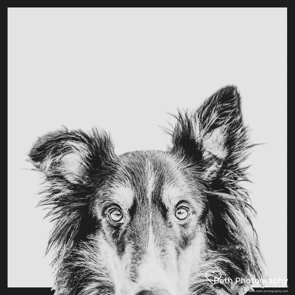 Beth Photography - Pet Photographer -Servicing Ottawa to Cornwall-48.jpg