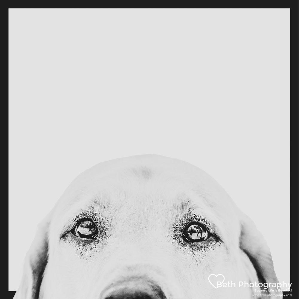 Beth Photography - Pet Photographer -Servicing Ottawa to Cornwall-46.jpg