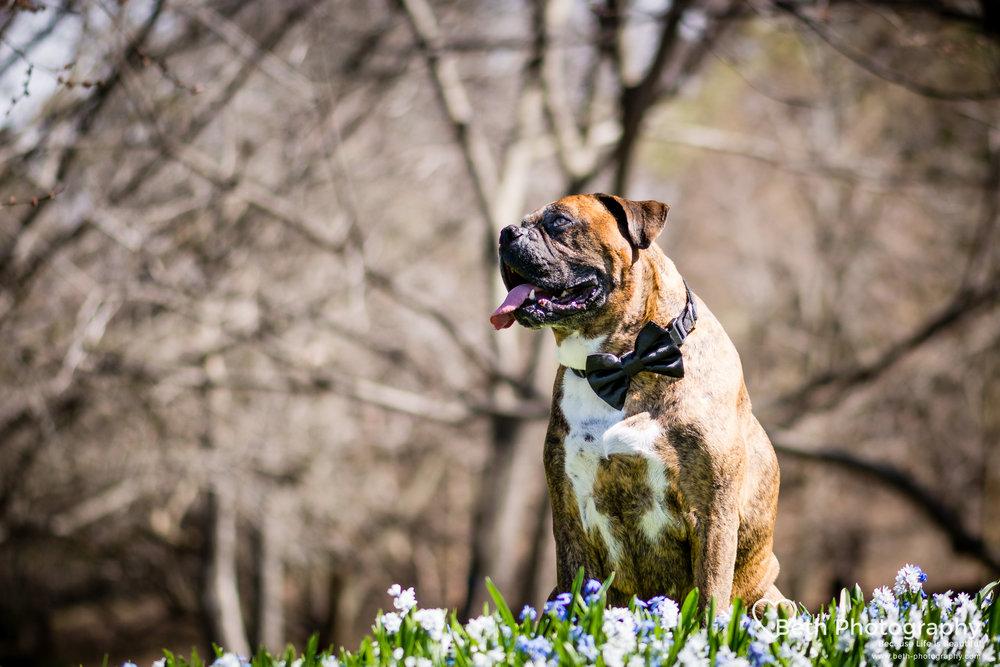 Beth Photography - Pet Photographer -Servicing Ottawa to Cornwall-8.jpg
