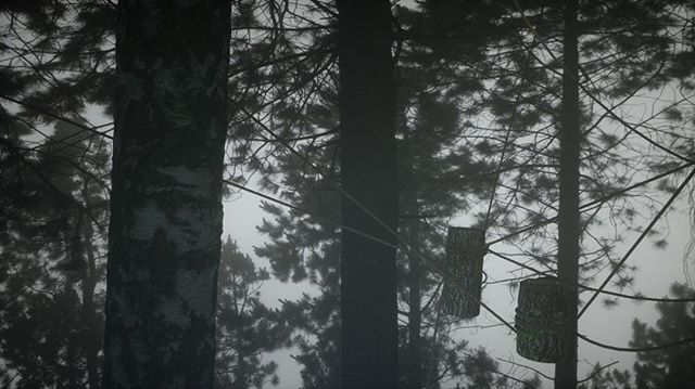 Couple of logs hanging in the canopy, with unintentional Endor vibes.  Thanks to Simon feilder rope presets, Maxtextures for wood ends and David chumilla liccioli  for bark. #mdcommunity #renderzone #c4d #octane . #tree #3Dart #digitalillustration #conceptart #concept #render #octanerender #art  #instart #abstract #3D #illustrator #artist #dailyart #abstract#cinematic #setdesign #architecture #forest #mgcommunity #setdesigner #artdepartment #cinedesign