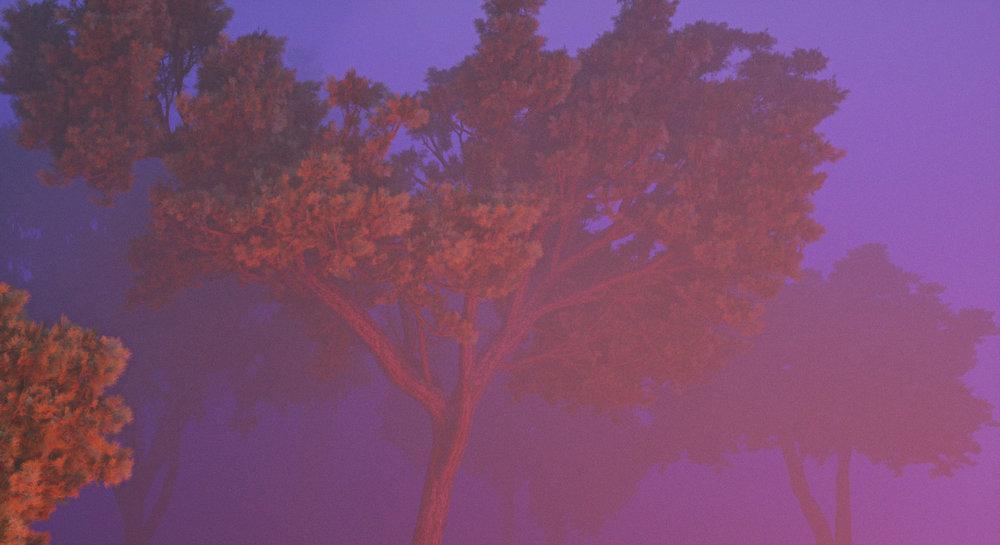 forest fog copy.jpg