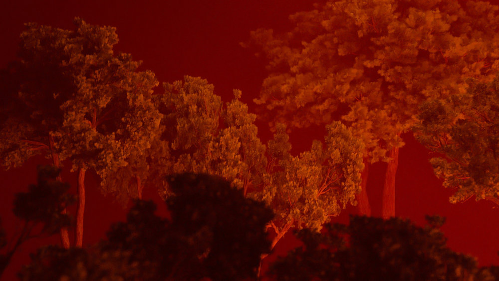 forest fog red ALTERNATIVE 1 copy.jpg