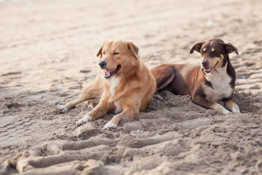 Beach buddies.