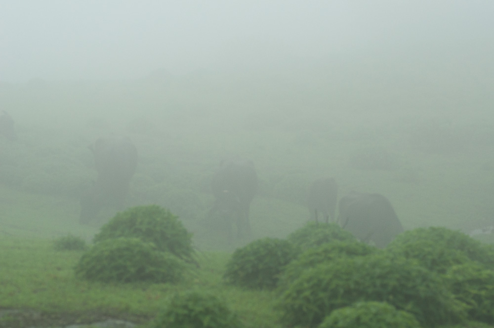 Visibility is typically poor.