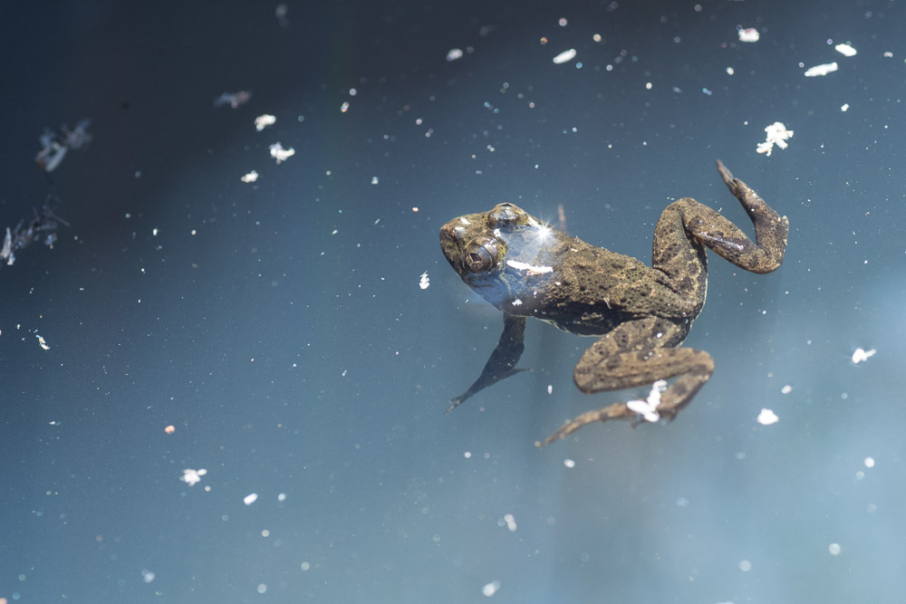 What happens when amphibians park illegally?