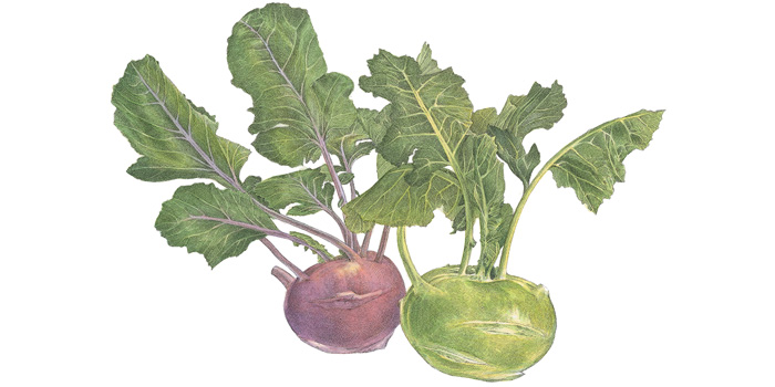 http://gardenandgun.com/article/whats-season-kohlrabi
