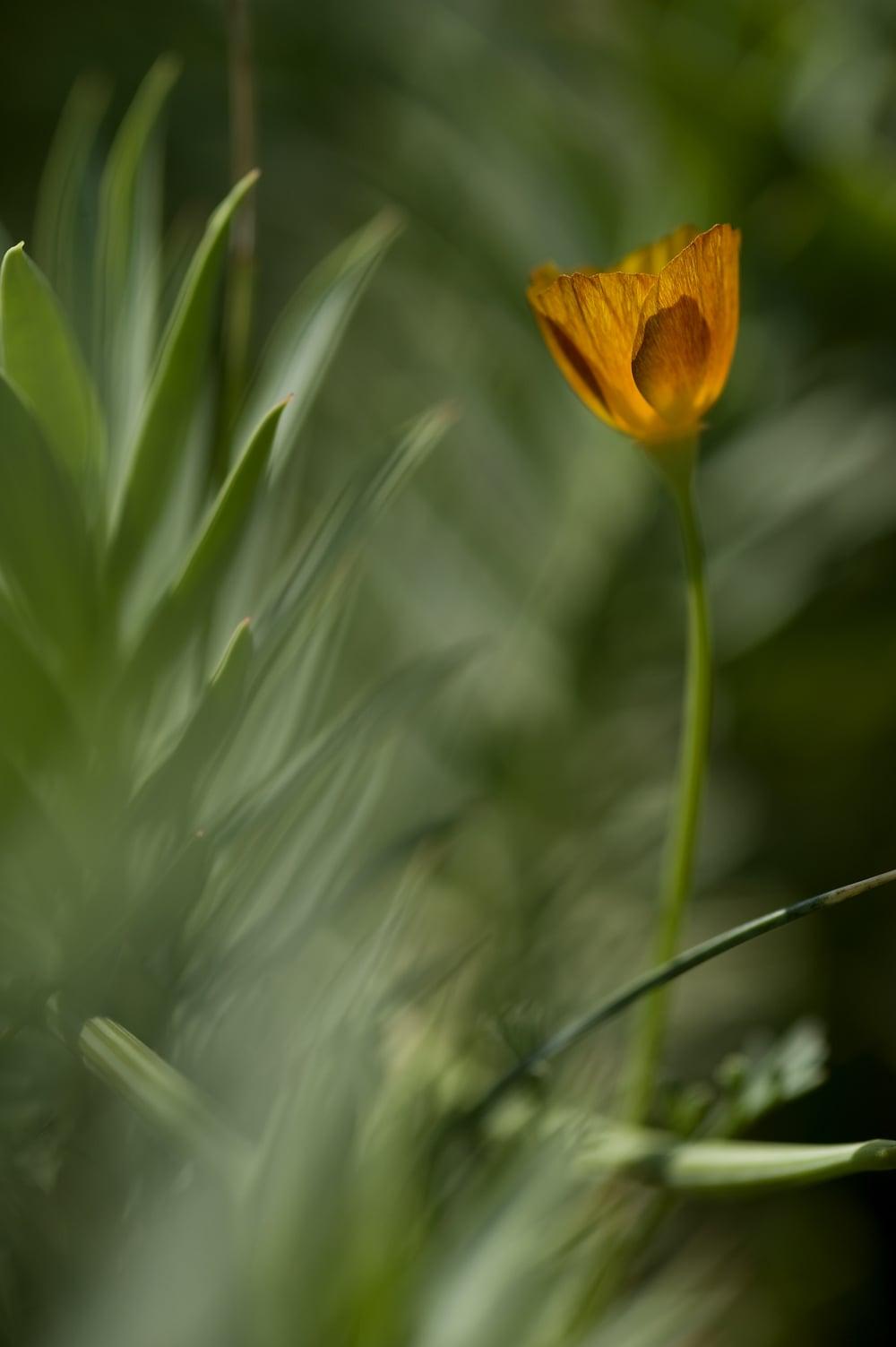 #22 Orange flower