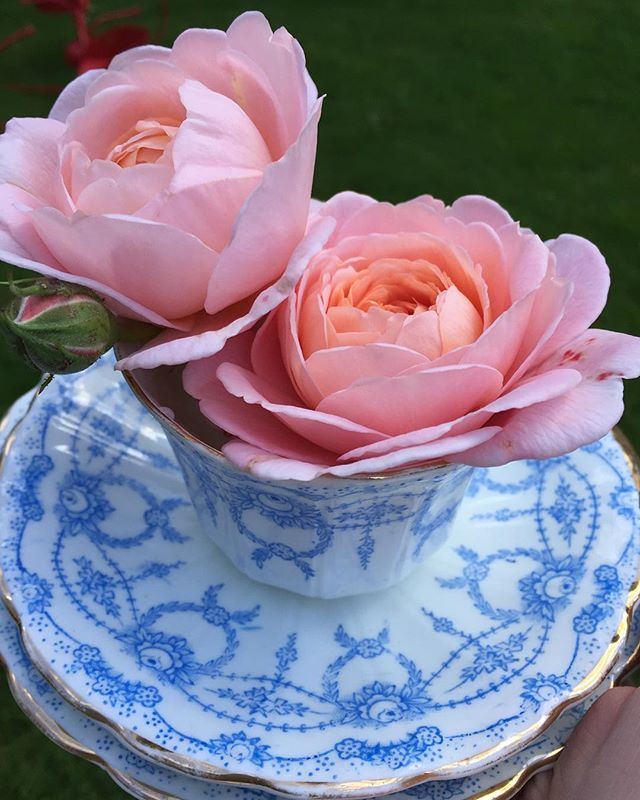 Soft pink and classic blue fine china, possibly the prettiest combination ever 😍  #vintagechina #chinahire #pearlsandpeonies #weddinginspiration #vintagewedding #vintageteacup #teacup #trio #handpainted #afternoontea #hightea #wedding #vintage #nofilter #davidaustinroses #queenofsweeden