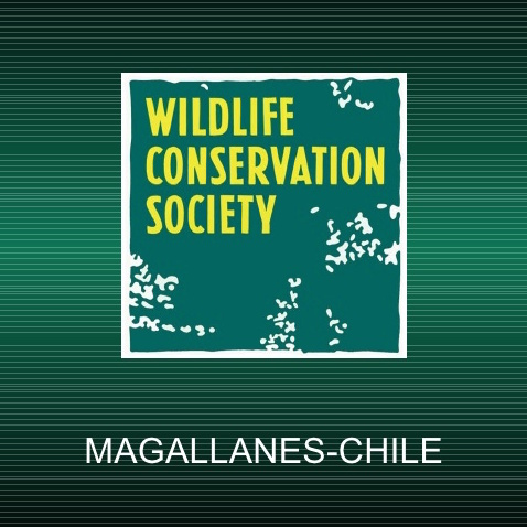 wildlife-conservation-society-en-magallanes-1-728.jpg