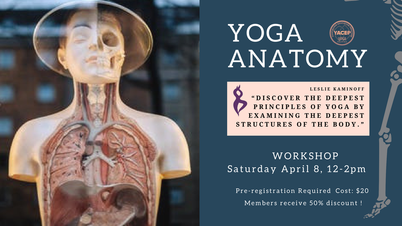 Yoga Anatomy — Essencia Yoga Teacher Training