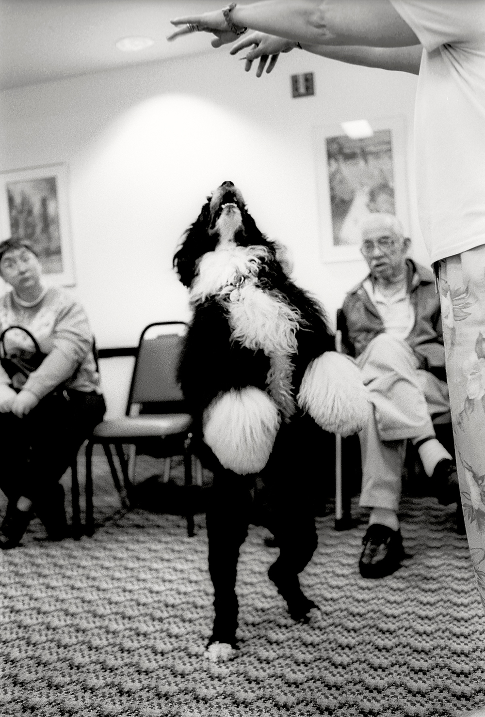 Sirius Fun Animal Therapy dog performs at retirement home