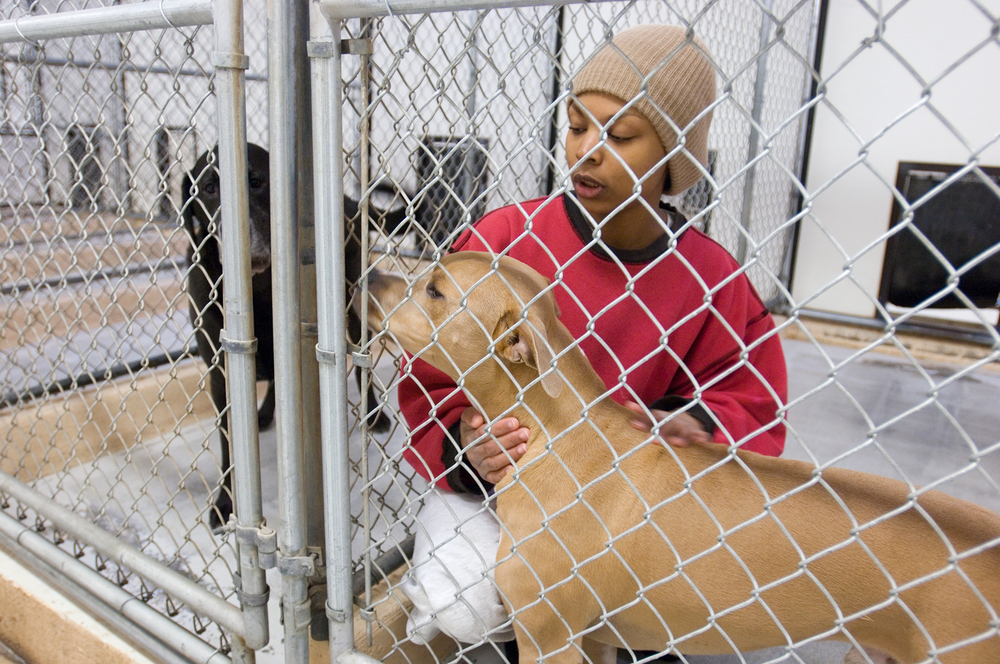 At Prison Pet Partnership Program, canines and humans rehabilitate each other, BARK magazine