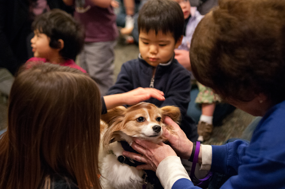Teams of therapy dogs and handlers greet children at UW family housing, College Dogs