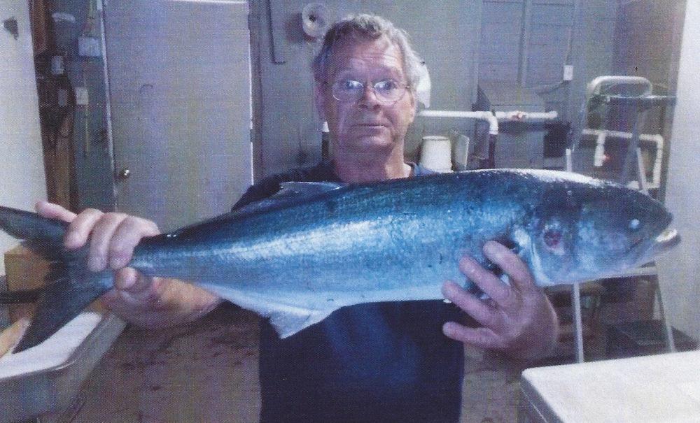 Dale Harkin (Bluefish)