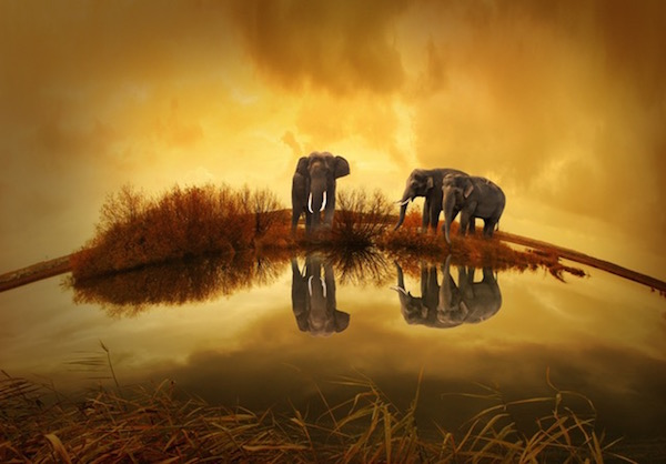 thailand-elephant-sunset-nature-68550.jpeg