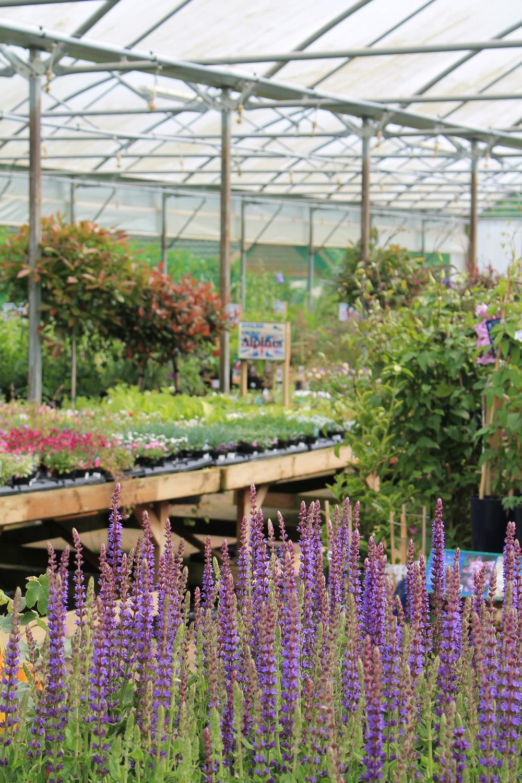 Staverton Nursery Home Grown Plants