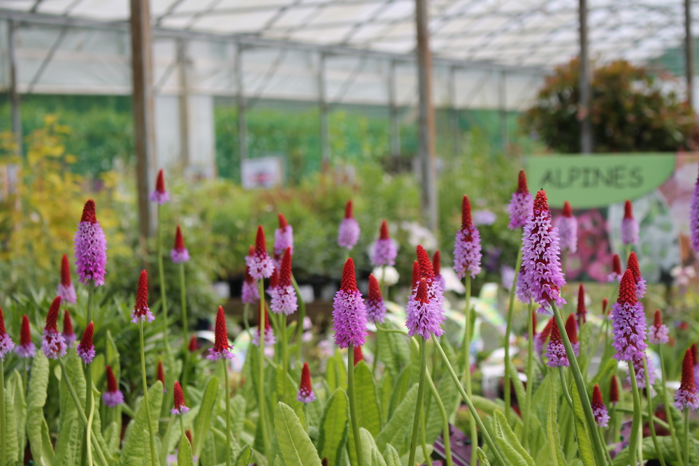 Staverton Nursery Home Grown Plants