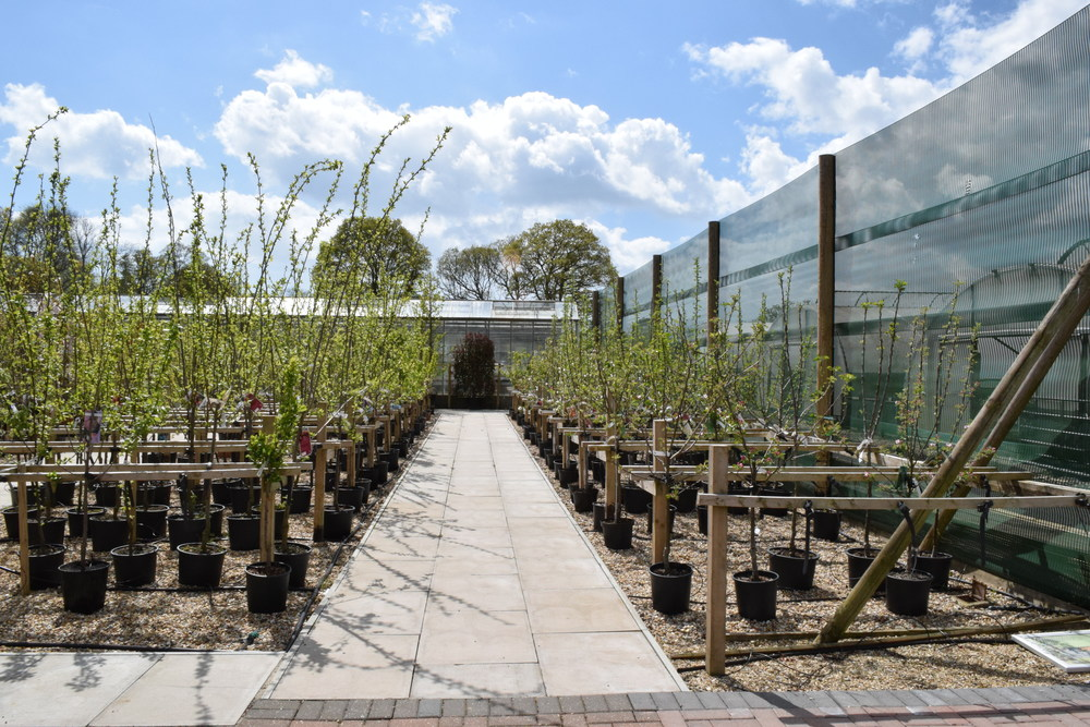 Staverton Nursery Fruit Trees