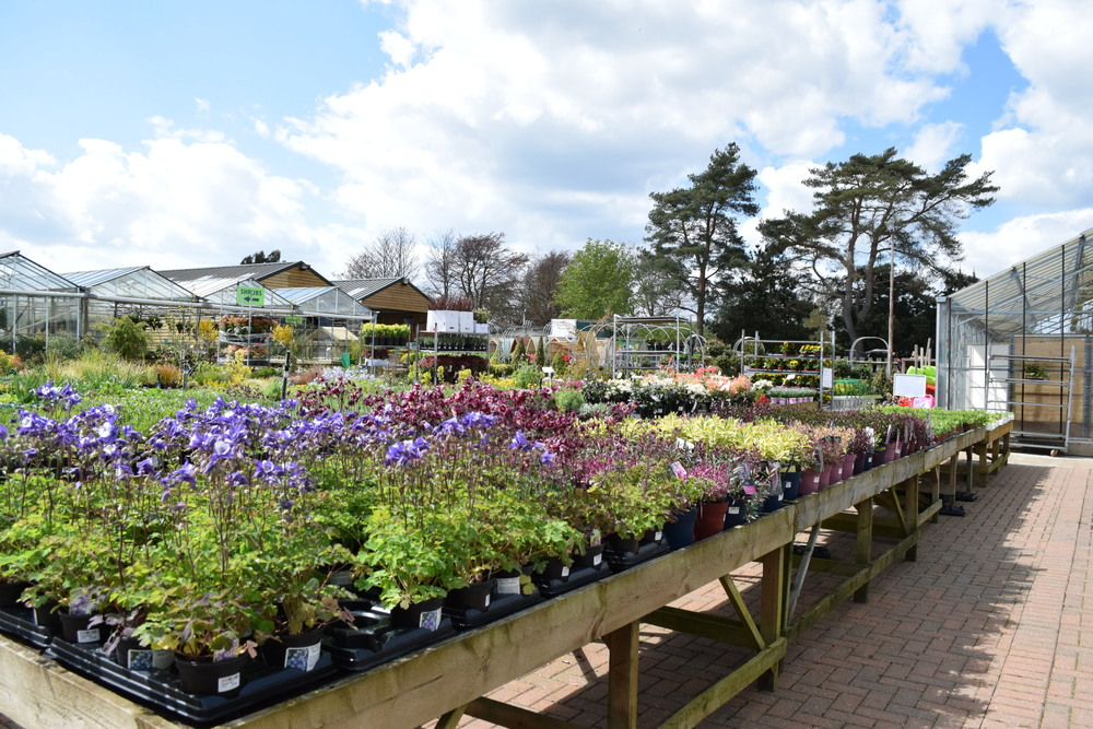 Staverton Nursery Sussex Grown Plants